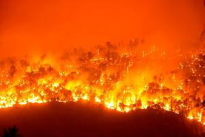 Windy Fire threatens California's iconic sequoia forest